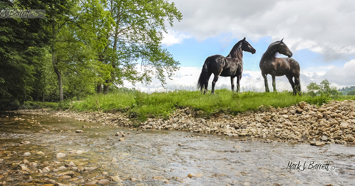 Friesian horses stand by creek side silhouetted by stromy sky.