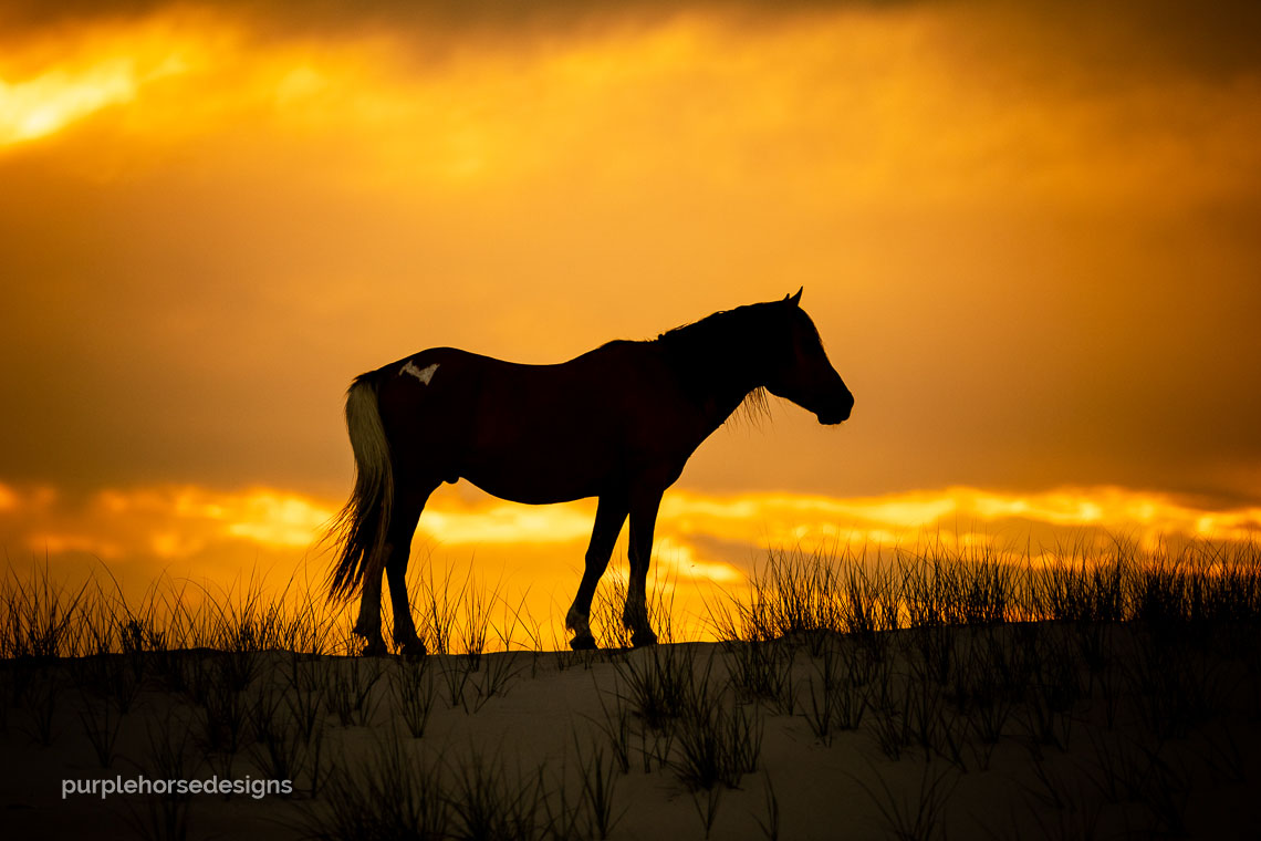 Purple Horse Designs Anna Smolens 'Assateague Lightning'