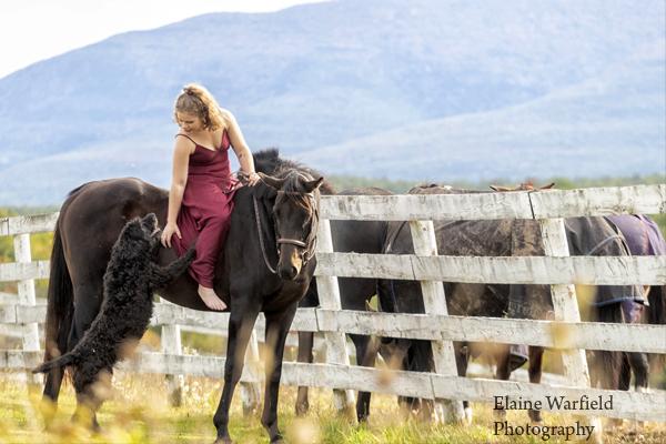 equine photographer elaine Warfield 4