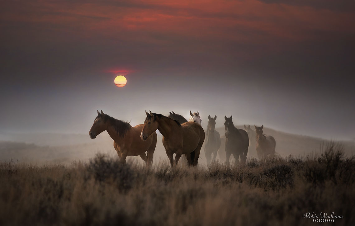 fire sun horses-RobinWadhams