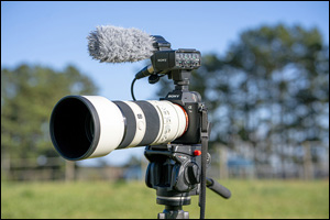 Basics of Equine Videography with Scott Trees